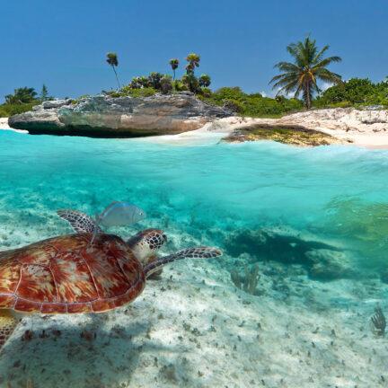 Zeeschildpad in de zee bij Playa Del Carmen, Mexico
