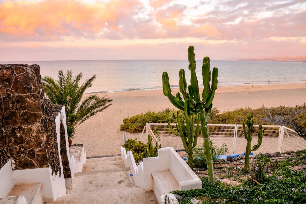 Strand van Costa Calma cactus op Fuerteventura