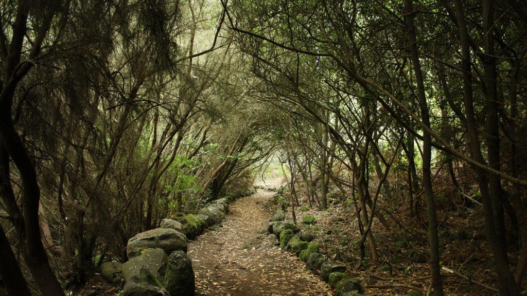 Bos van La Zarza op La Palma, Spanje