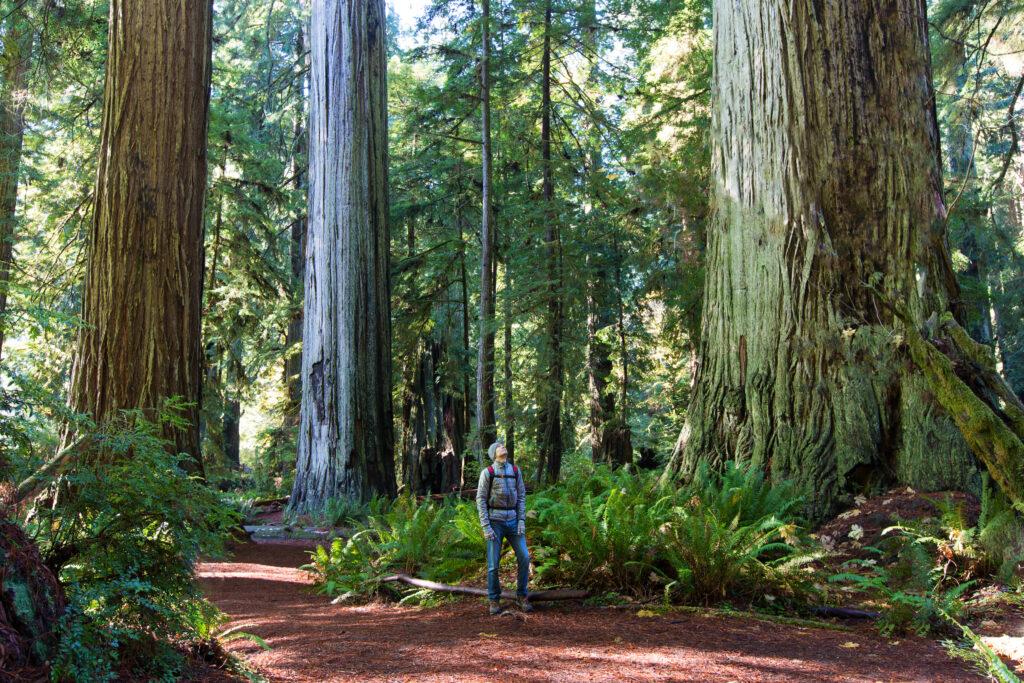 Man naast een sequoia boom in Redwood National Park
