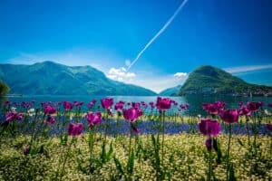 Tulpen bij het meer van Lugano in Zwitserland