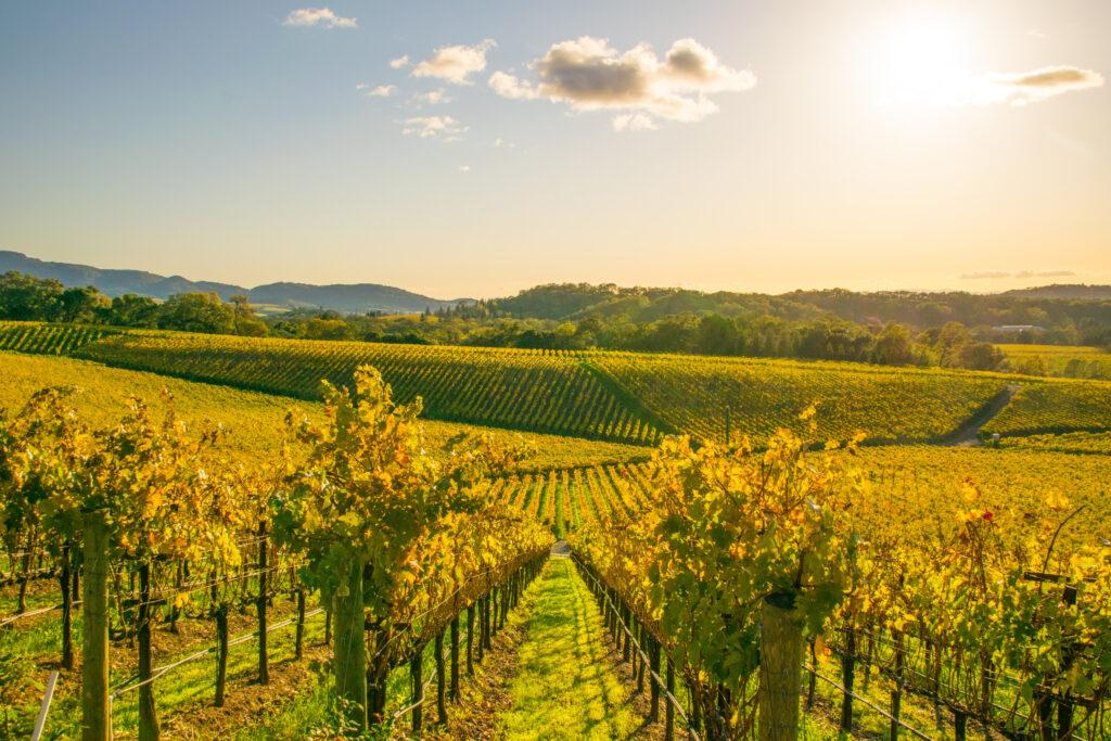 Uitzicht over de wijngaarden van Napa Valley in Californië