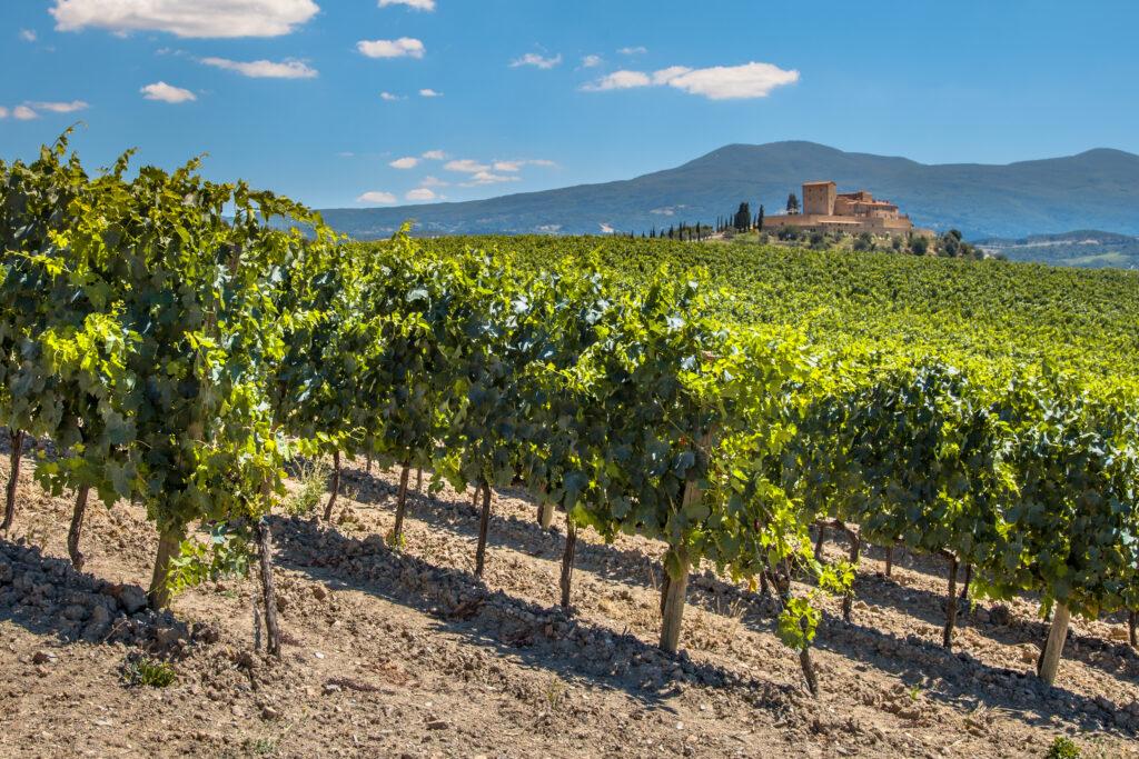 Wijngaard in de Chianti