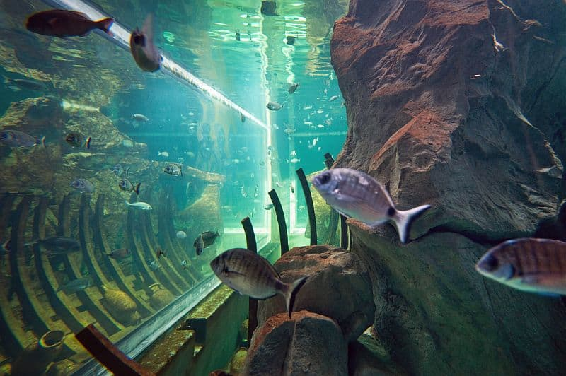 Vissen en een scheepswrak in het water van Aquarium Livorno
