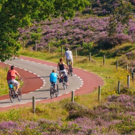 Fietsers fietsen door het Nationale Park Veluwezoom in Gelderland