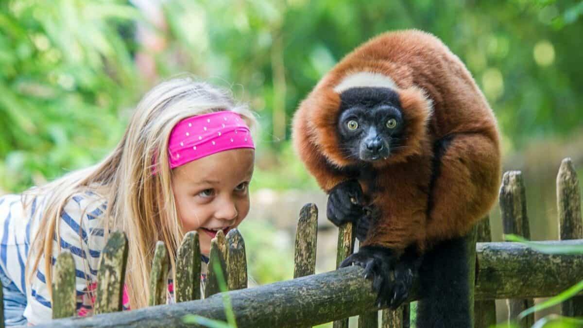 Meisje kijkt naar een aap in de Apenheul in Apeldoorn, Gelderland
