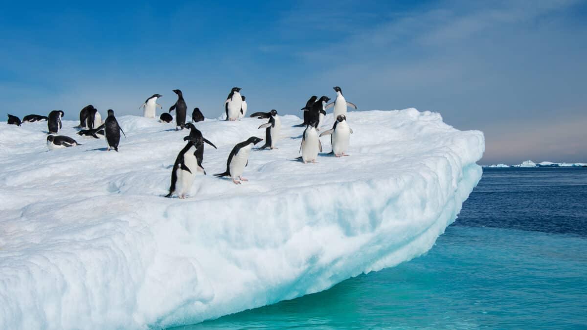 Pinguïns op een ijsschots op Antarctica