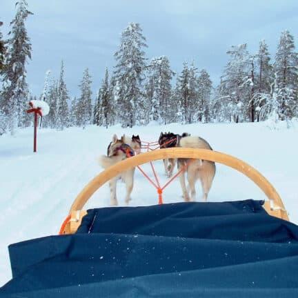 Sleetje rijden met sledehonden in de sneeuw