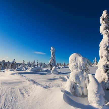 Winters landschap van Levi in Finland