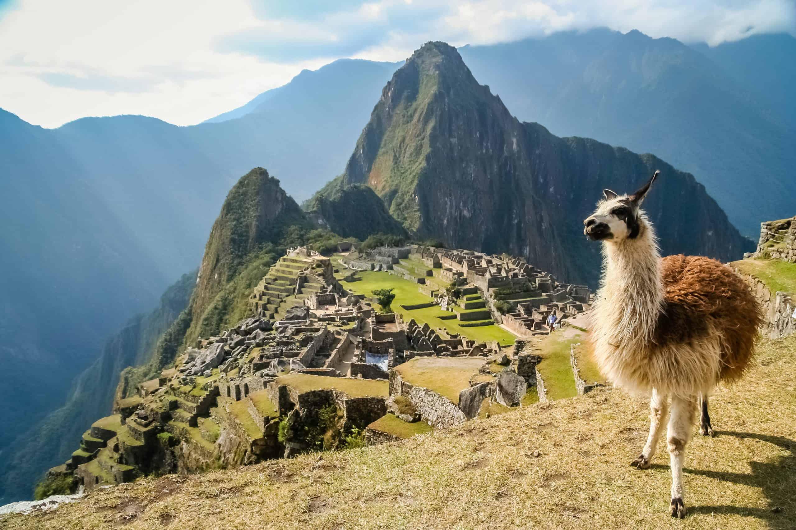Lama in Macchu Picchu, Peru