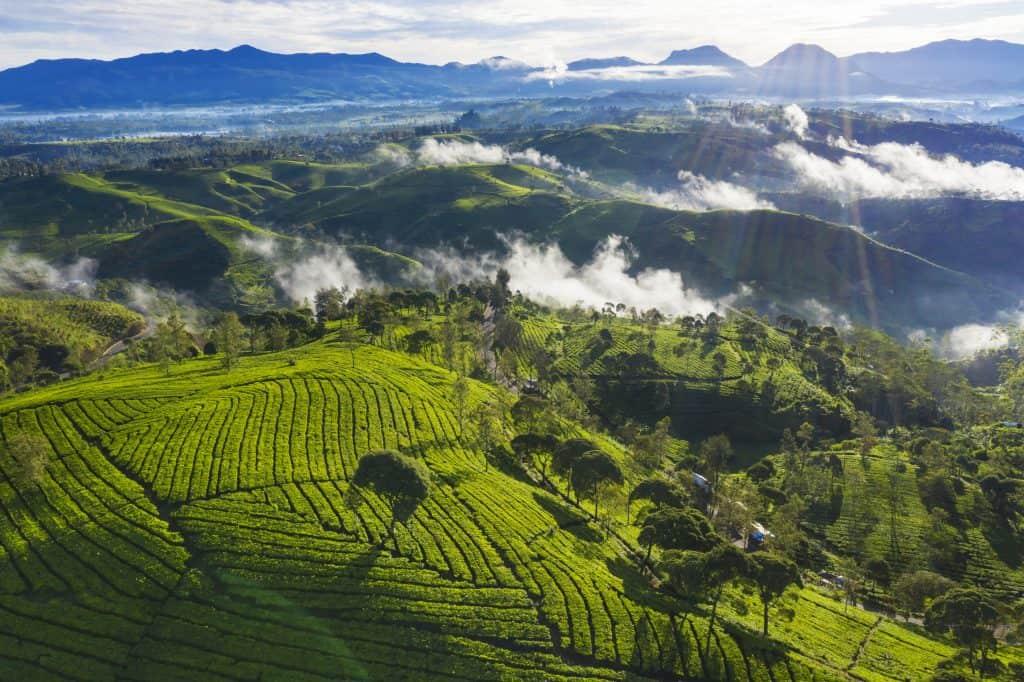 Theeplantage in Bandung op Java, Indonesië