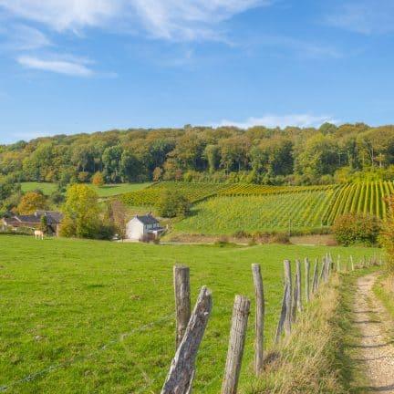 Landschap in Limburg met glooiende heuvels