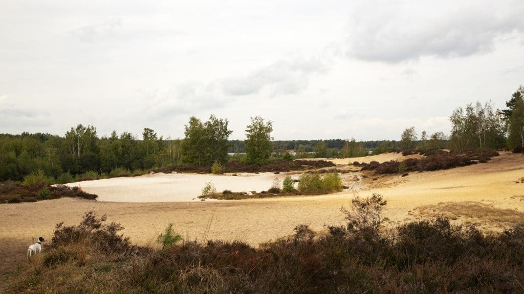nationaal park de maasduinen in Limburg