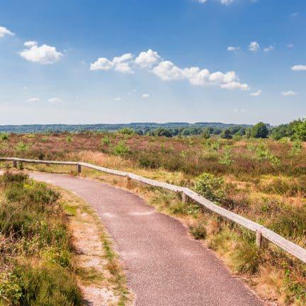 Wandelpad in nationaal park Sallandse Heuvelrug, Overijssel