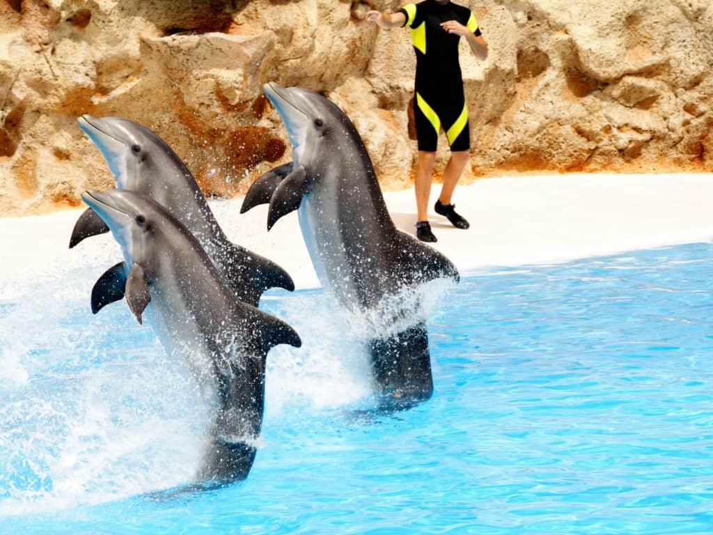 Dolfijnen show in het Dolfinarium in Harderwijk