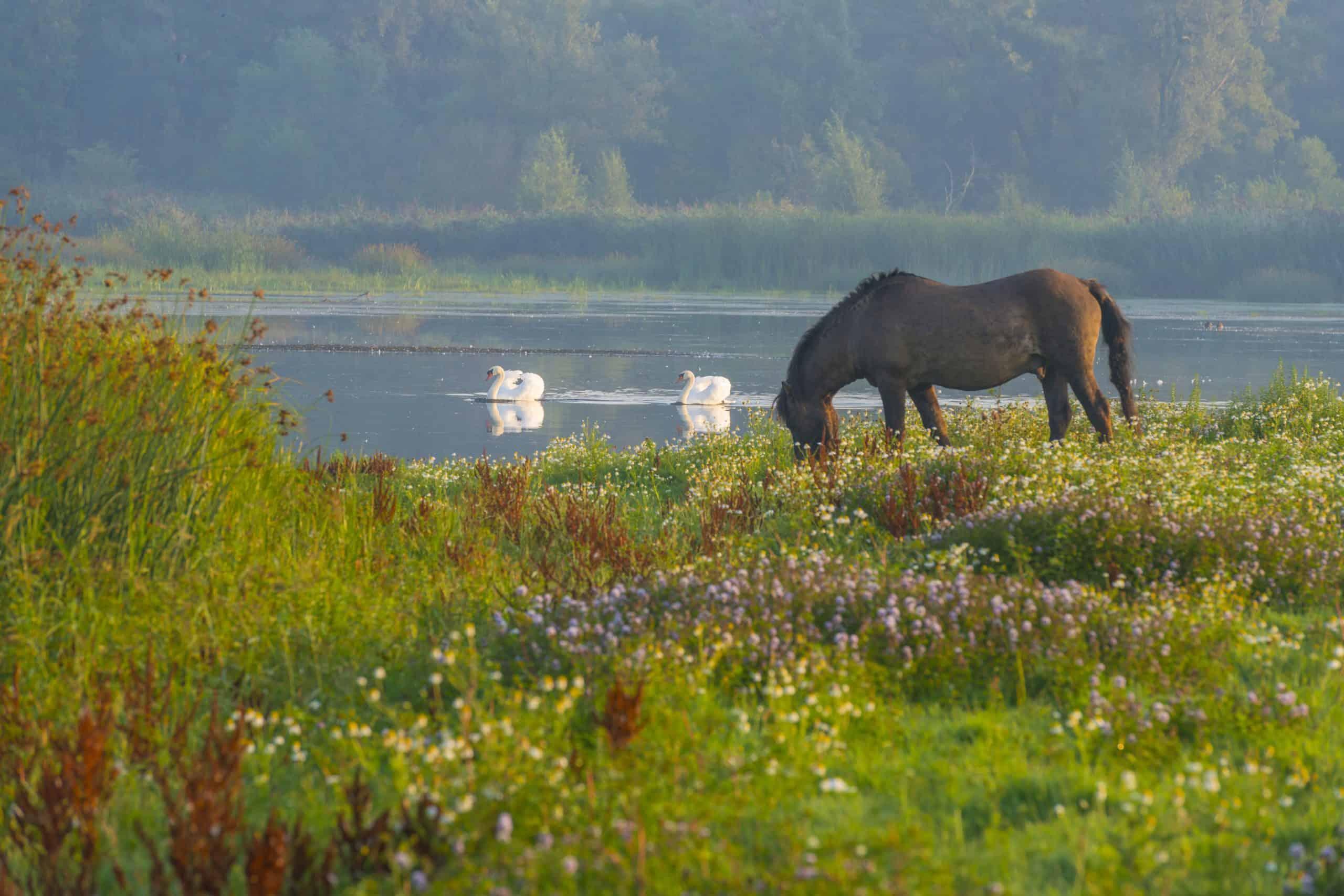 Oostvaardersplassen in Flevoland