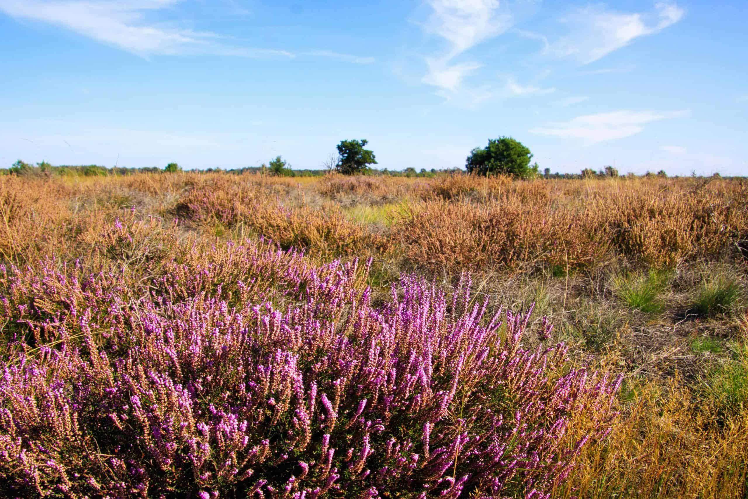 Strabrechtse Heide bij Eindhoven in Noord-Brabant