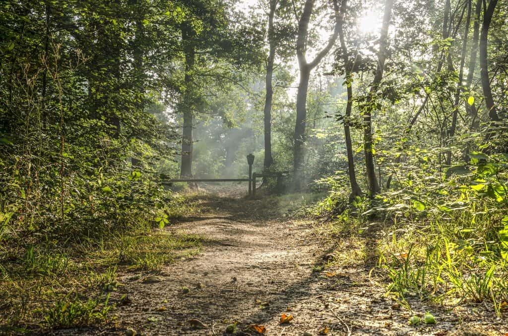 Wandelpad in een groen bos in Nederland