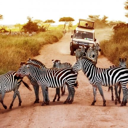 Top 5 mooiste plekken voor een safari in Afrika