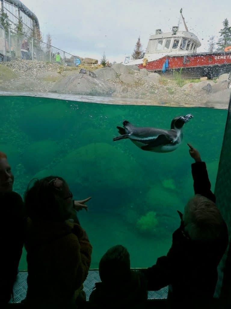 Kinderen kijken naar een pinguïn onder water in Nortica