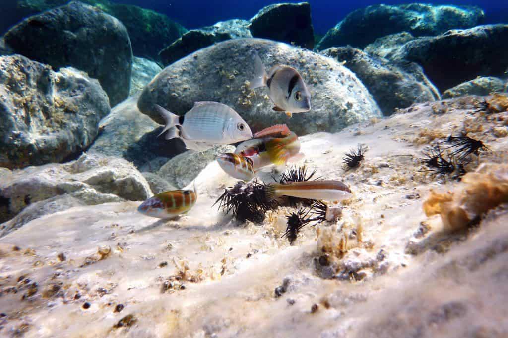 Vissen onder water op de Canarische Eilanden