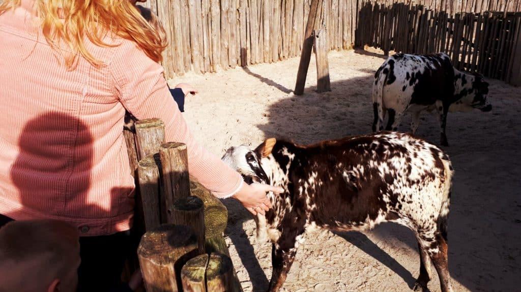 Vrouw aait een Nubische geit in de kinderboerderij van Serenga