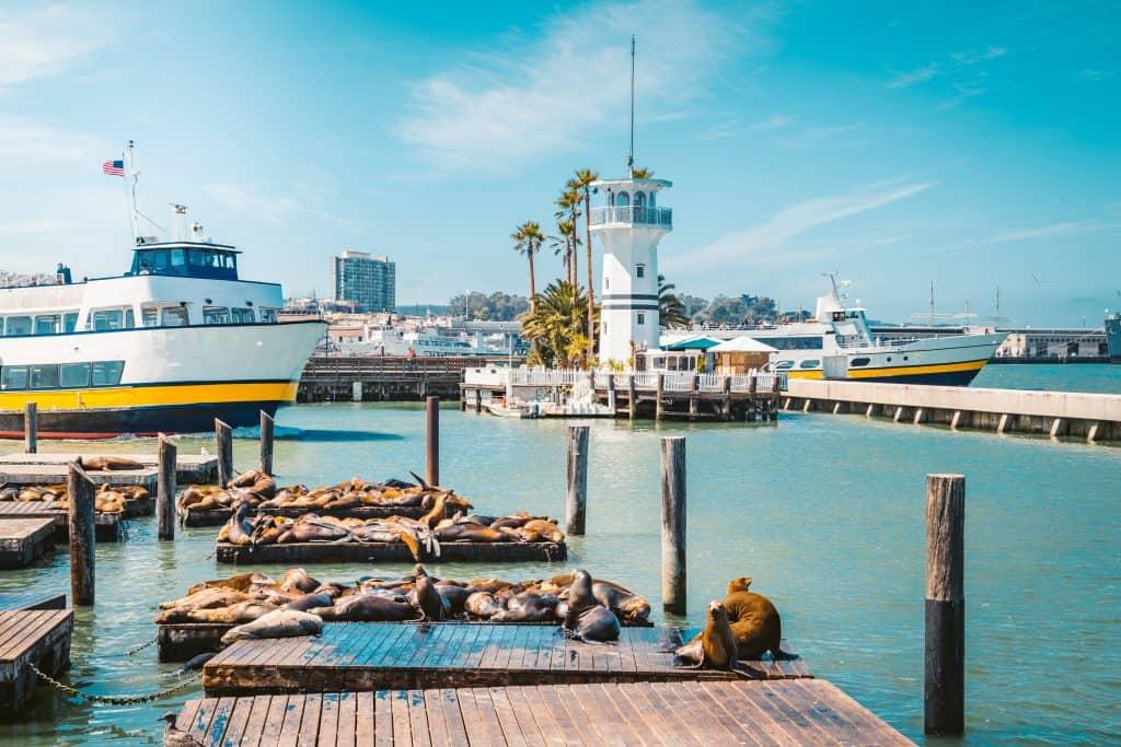 fishermans wharf met zeeleeuwen in San Francisco