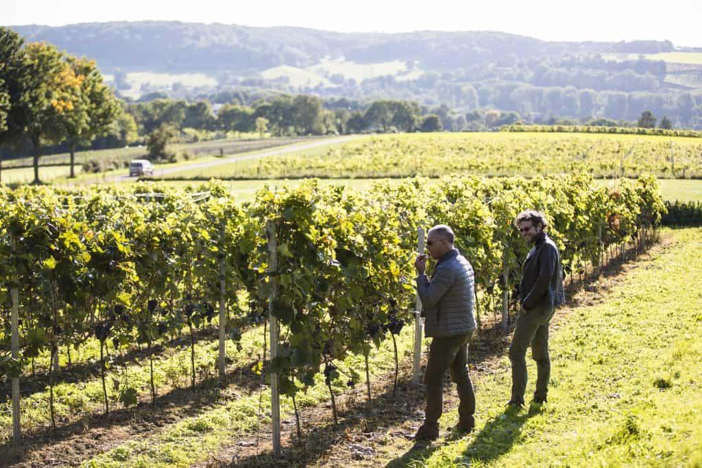 Wijngaard in Zuid Limburg, Nederland